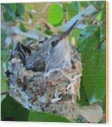 Hummingbird In Nest 1 Wood Print