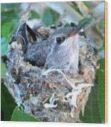 Hummingbird In Nest 2 Wood Print