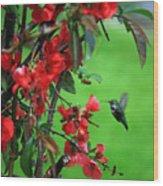 Hummingbird In The Flowering Quince - Digital Painting Wood Print