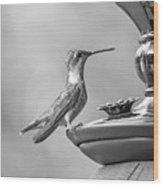 Hummingbird Intrigue  Wood Print