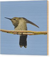 Hummingbird Looking Right Wood Print