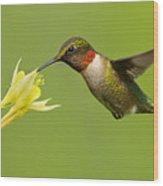 Hummingbird Wood Print by Mircea Costina Photography