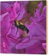 Hummingbird Moth On Azalea Wood Print