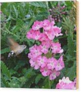 Hummingbird Moth On Pink Verbena Wood Print