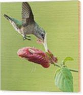 Hummingbird Nose Dive Wood Print