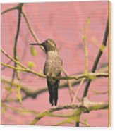 Hummingbird On A Branch Wood Print