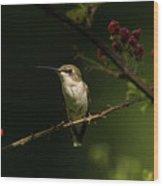 Hummingbird On Blackberry Bush Wood Print
