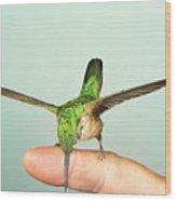 Hummingbird On My Finger Wood Print