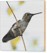 Hummingbird On Tightrope Wood Print