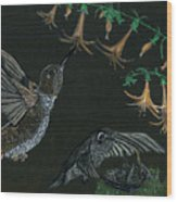 Hummingbird Parents Wood Print