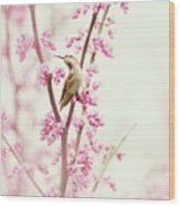 Hummingbird Perched Among Pink Blossoms Wood Print