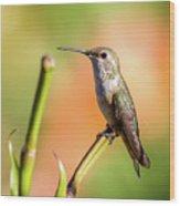 Hummingbird Perched II Wood Print