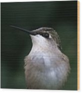 Hummingbird Portrait Wood Print
