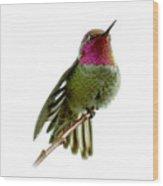 Hummingbird Portrait T1 Wood Print