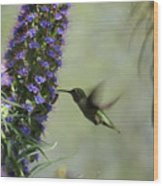 Hummingbird Sharing Wood Print