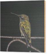 Hummingbird Sitting In The Rain Wood Print