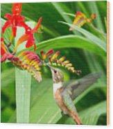 Hummingbird Snacking Wood Print