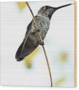 Hummingbird Tongue Wood Print