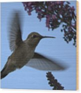 Hummingbird Wings And Butterfly Bush Wood Print