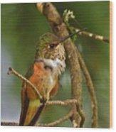 Hummingbird With An Itch Wood Print