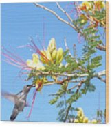 Hummingbird With Honeysuckle Wood Print