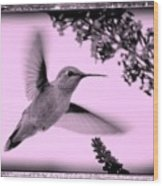 Hummingbird With Old-fashioned Frame 2  Wood Print