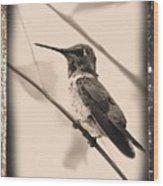 Hummingbird With Old-fashioned Frame 3 Wood Print