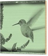 Hummingbird With Old-fashioned Frame 5 Wood Print