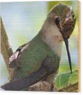 Hummingbird With Small Nest Wood Print