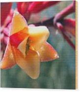 Hummingbird Yucca Wood Print