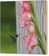 Hummingbird1 Wood Print