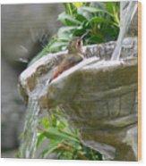 Hummingbirds Do Take Baths Wood Print