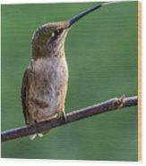 Hummingbird's Quick Tongue Wood Print