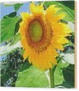 Humongous Sunflower Wood Print