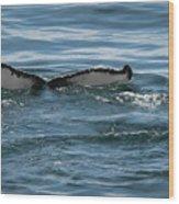 Humpback Tail Fins Wood Print