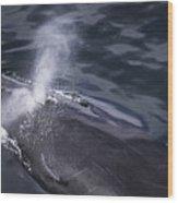 Humpback Whale Blowing Wood Print