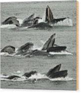 Humpback Whale Bubble-net Feeding Sequence X5 V2 Wood Print