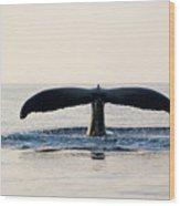 Humpback Whale Fluke Wood Print by M Sweet