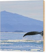Humpback Whale Flukes Wood Print