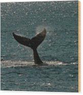 Humpback Whale Lifts Its Fluke. I Wood Print