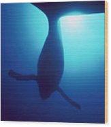 Humpback Whale Megaptera Novaeangliae Wood Print by Flip Nicklin