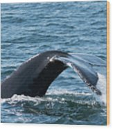 Humpback Whale Of A Tail Wood Print