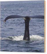 Humpback Whale Swimming Wood Print