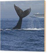 Humpback Whale Tail Lobbing Near Cruise Wood Print by Flip Nicklin