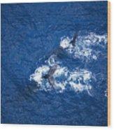 Humpback Whales Aerial Wood Print