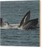 Humpback Whales Megaptera Novaeangliae Wood Print