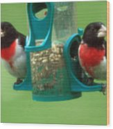 Hungry Birds Wood Print