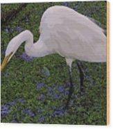 Hungry Great Egret Wood Print