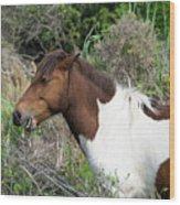 Hungry Horse - Assateague Island - Maryland Wood Print