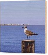 Hungry Sea Gull Wood Print